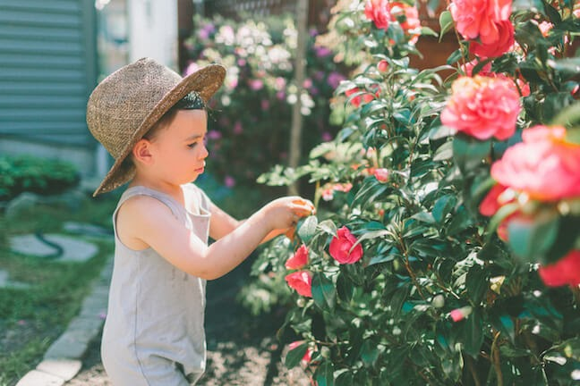 child with gray tank top, hat, picking pink flowers from bush