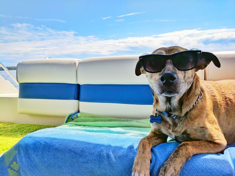 Flying with Pets: What Insurance Does & Doesn't CoverMost pet travel insurance policies will cover illnesses, accidents, and emergencies that affect your pet while you're away from home. Most of today's airlines can accommodate pets, and top-rated pet travel insurers are also making it easier to have your favorite pet on board.