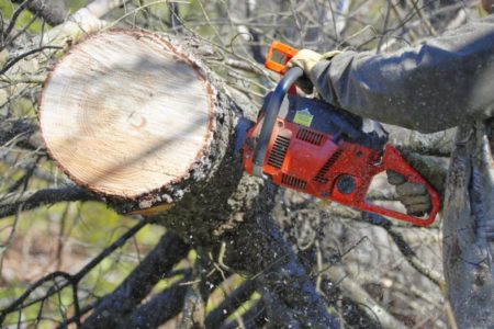 A close-up of a chainsaw being used to cut a blown down tree.