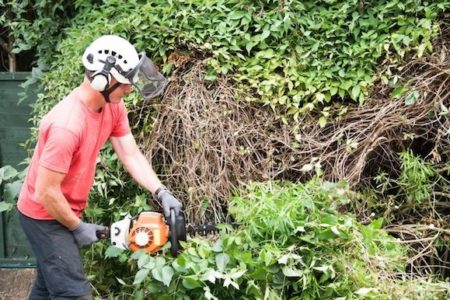An garden worker using a power hedge trimmer to cut back a large overgrown bush.