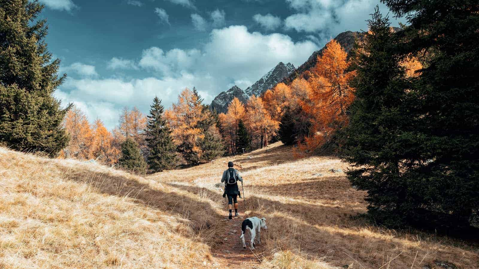 Man walking with dog on mountain trail - unsplash