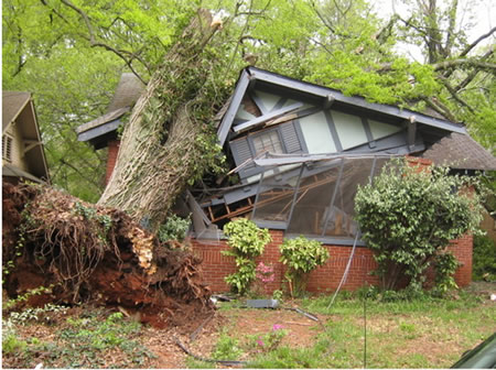 Tree Fell on House Home Insurance Coverage