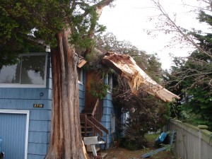 https://res.cloudinary.com/quotellc/image/upload/insurance-site-images/usinsuranceagents-live/2019/09/another_fallen_tree_not_our_house-300x225.jpg