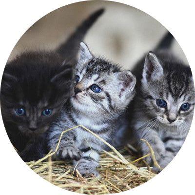 Insure your kitten