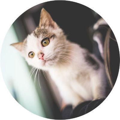 Lifetime pet insurance