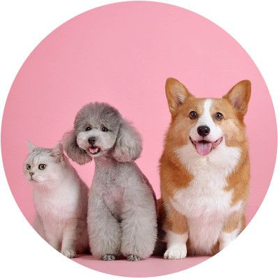 Pet insurance with Quotezone