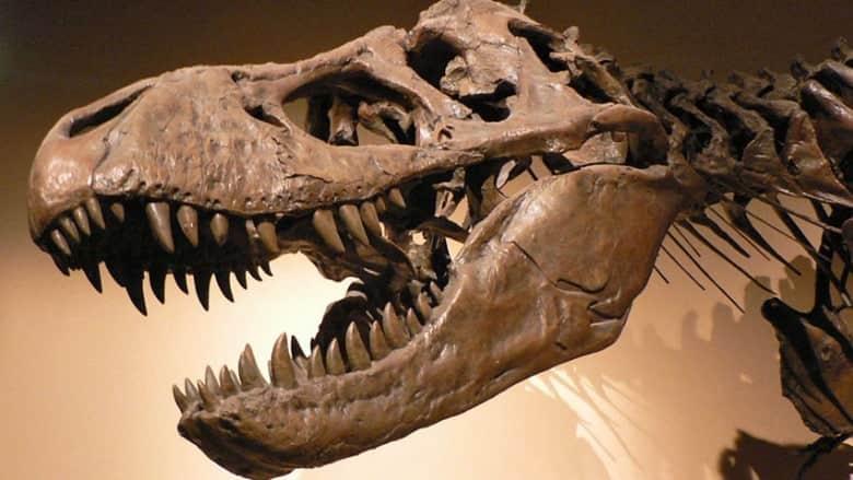 hi-852-tyrannosaurus-rex-p1050042-david-monniaux