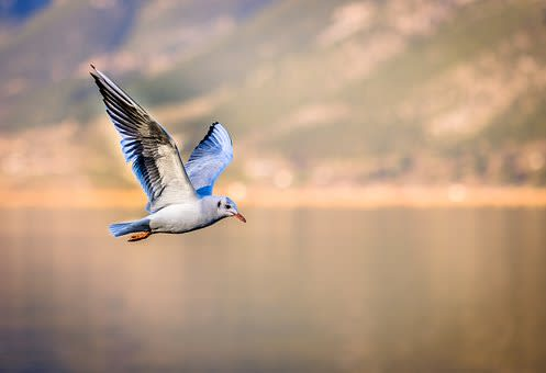 bird-3158784__340