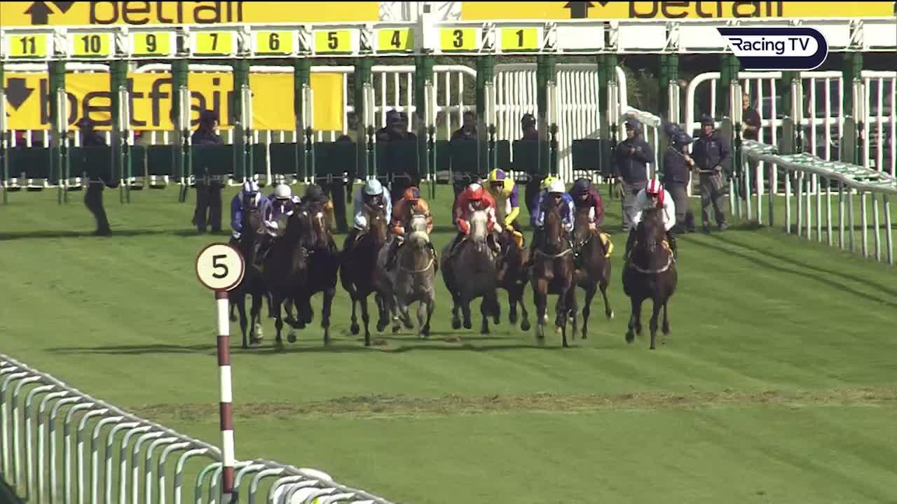 The Latest Horse Racing News & Results From Racing TV