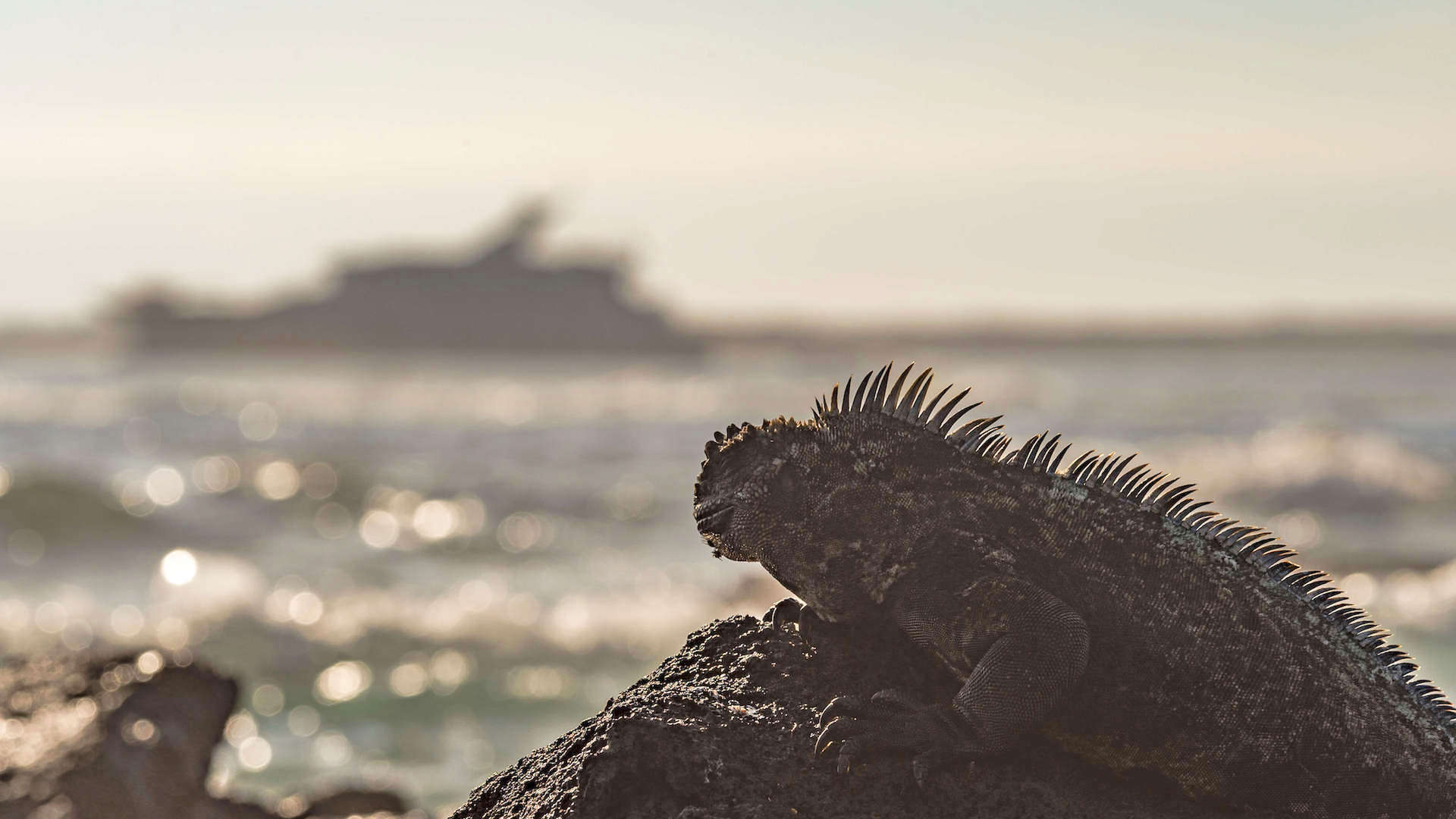 An Expedition Cruise To Galapagos