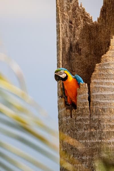 Bucket List Destination Pantanal