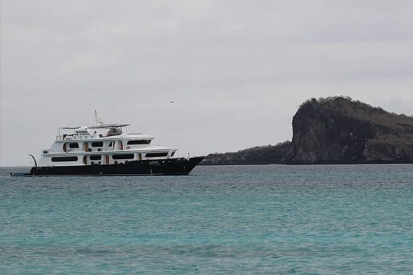 Petrel Cruise Navigation