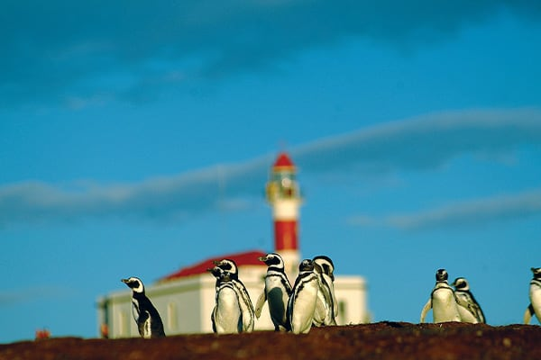 Penguins in front of light house