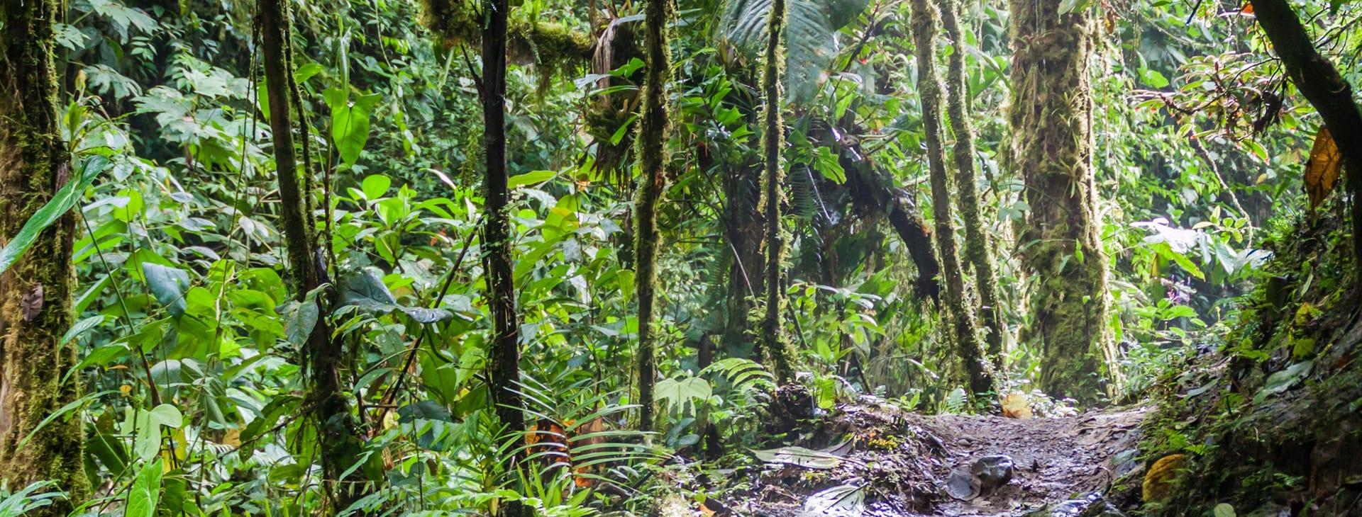 Cloud Forest in Ecuador