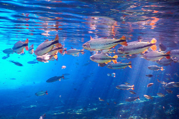 fish in crystal clear water
