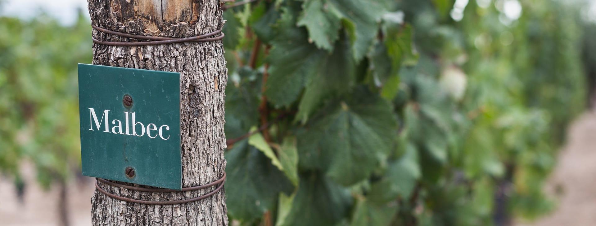 Mendoza Malbec Vineyards