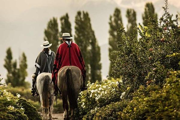 Horseback Riding in Vineyards