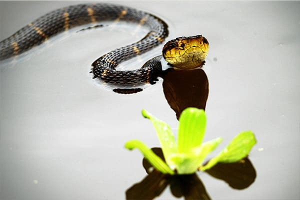 Snake in water next to plant