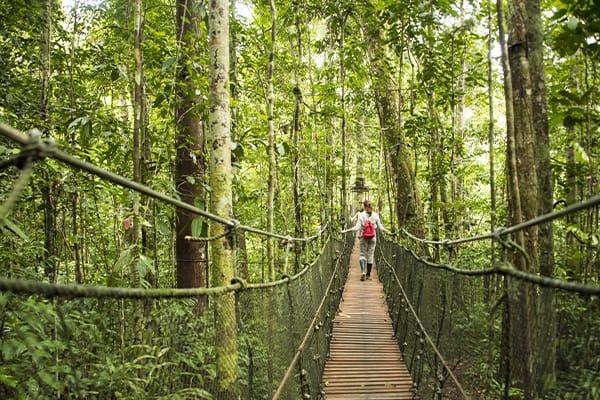 girl crossing treetop canopy