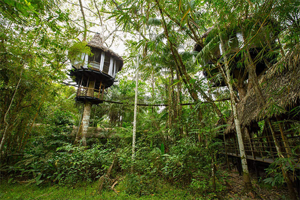 treehouse lodges in the canopy
