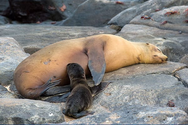 Sea lion on a rock