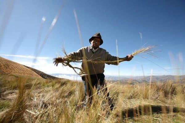 man cutting grass or something