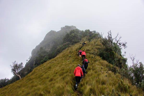 Foggy hike through high altitudes ecuador