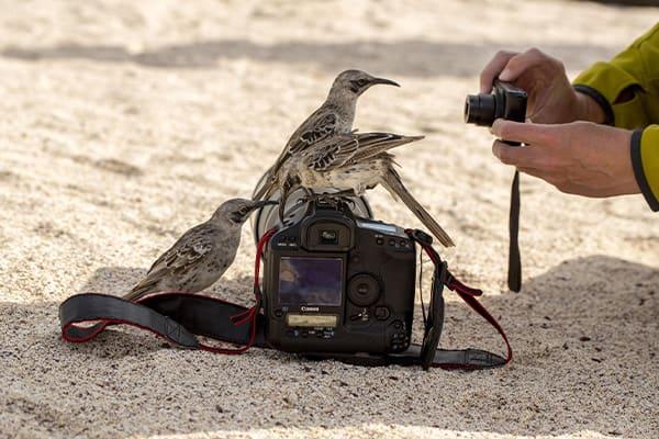 Galapagos fiinches on a camera