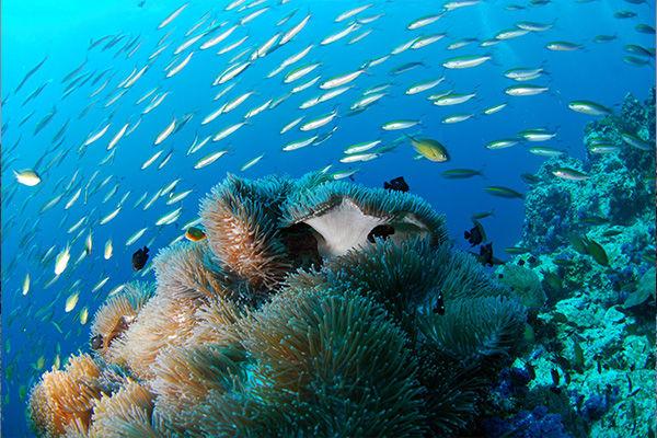 Galapagos underwater life