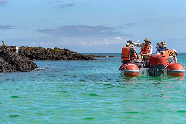 Panga Ride Galapagos wildlife observation