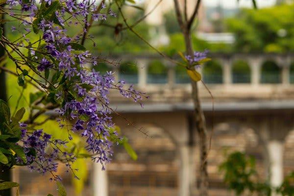 Flowering plants in tree Manaus