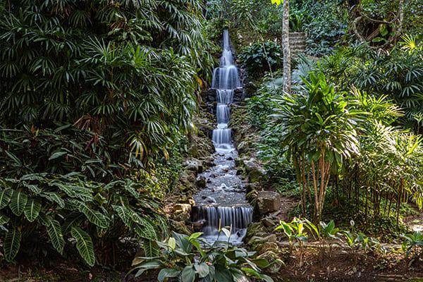 Botanical Gardens of Rio