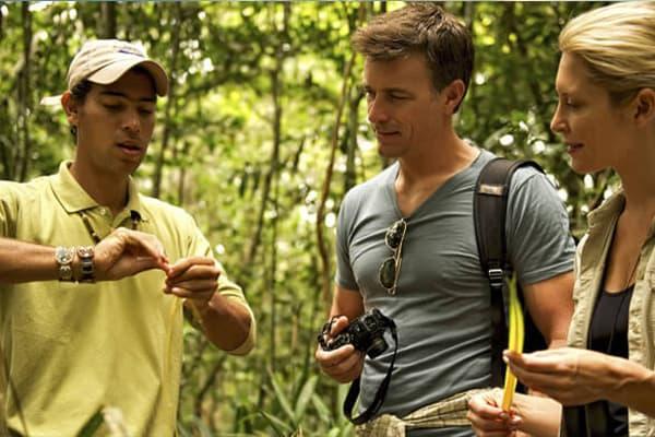 Jungle Excursion medicinal plants