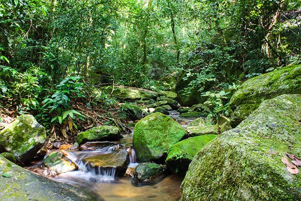 Tijuca forest creek