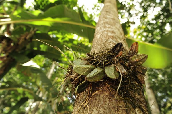 Orchid in a tree