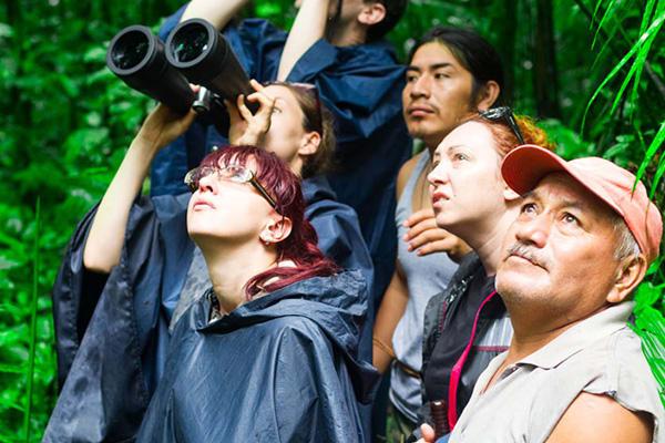 Jungle Excursion Rainforest