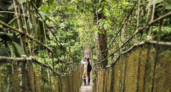 Girl Enjoying Canopy Walkway Brazil Pantanal