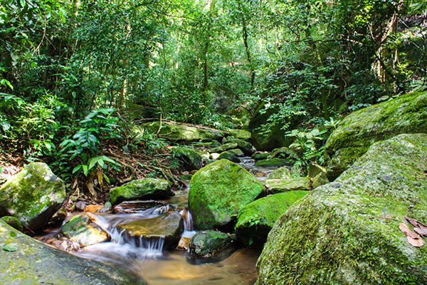 Day Tour including Tijuca Forest
