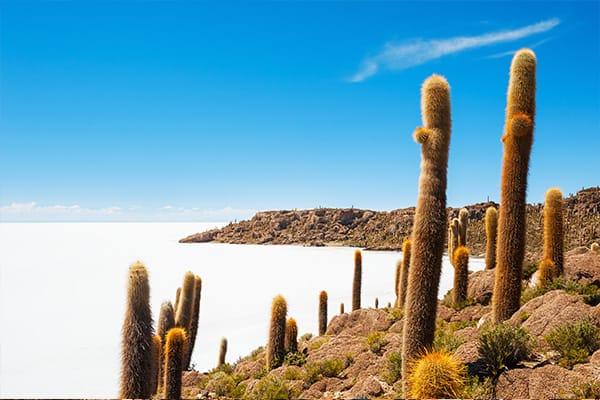 Island in salt sea of uyuni with cactus
