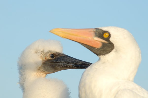 Couple on Galapagos Beach