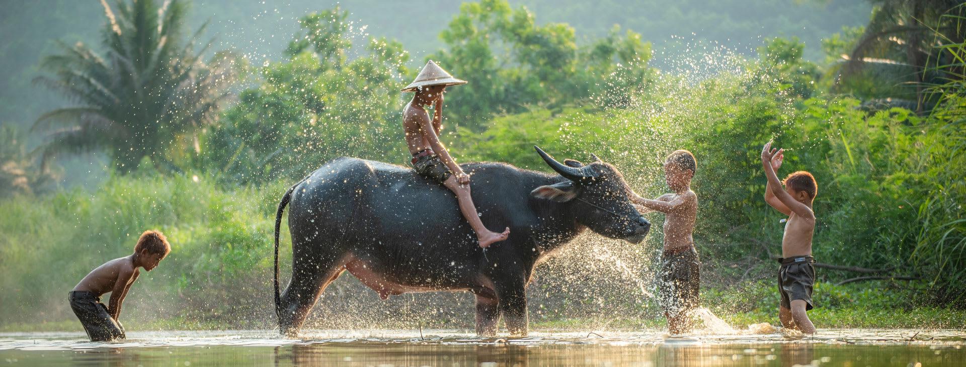 Kids playing with a water buffalo