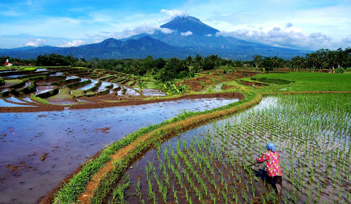 Rice terraces and a volcano in the background
