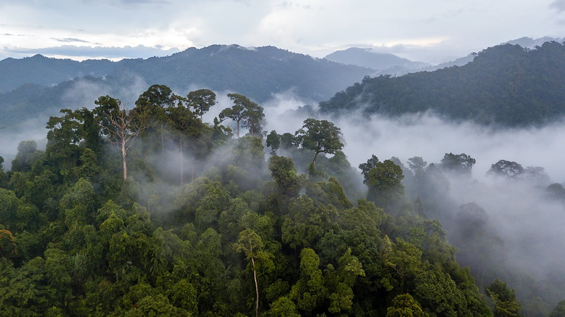 Aerial,View,Of,Mist,,Cloud,And,Fog,Hanging,Over