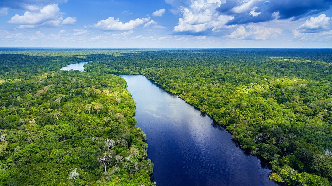 Amazon,Rainforest,In,Brazil