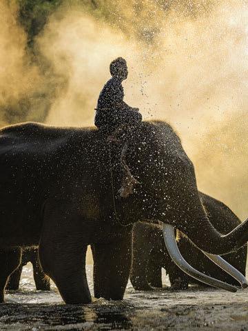 Boy sitting on the elephant
