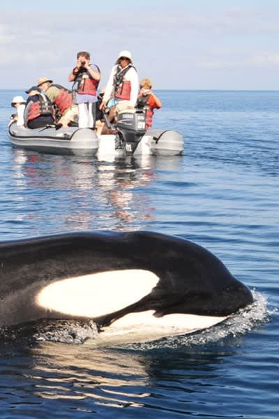 Expedition Cruise in the Galapagos Whale Watching