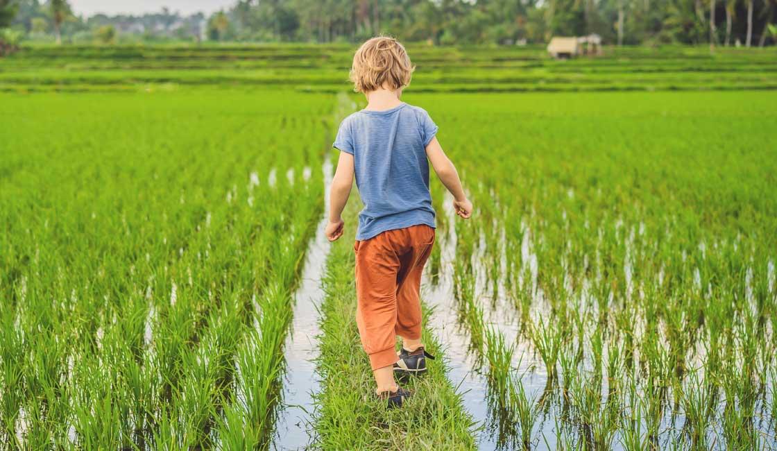 Boy walking through the rice field
