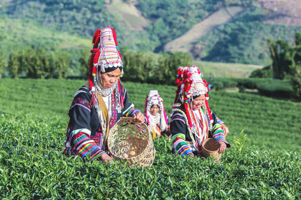 Women of the Akha Tribe
