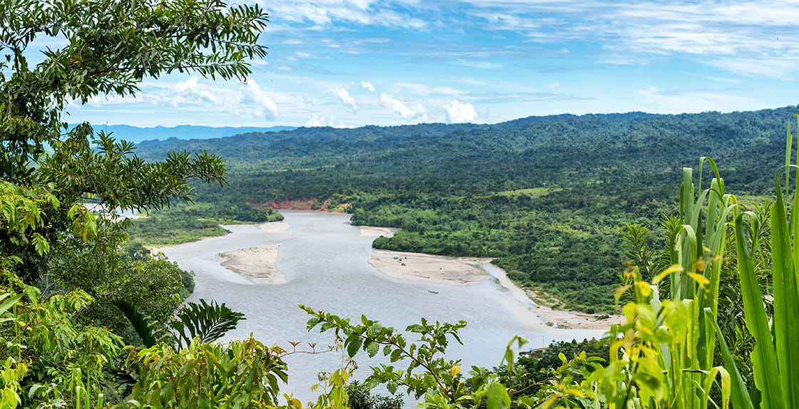View,Of,The,Amazonia,Lush,Forest,From,Manu,National,Reserve