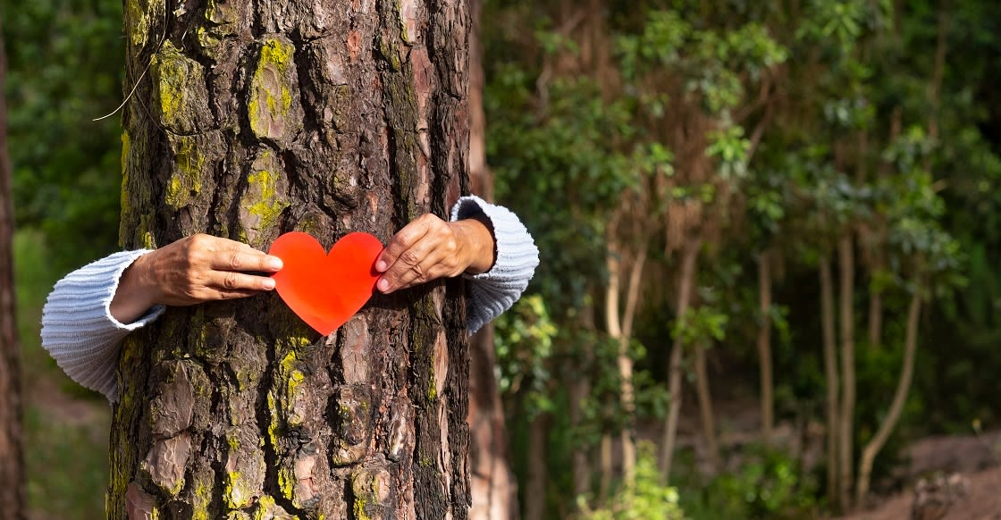 Human Arms Hugging A Tree
